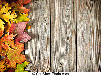 Autumn background with colored leaves - Autumn maple leaves...