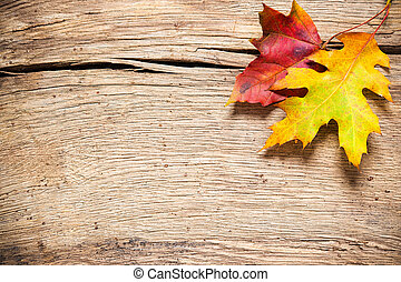 Autumn background with colored leaves - Autumn leaves over...