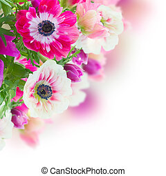 bunch of anemone flowers - bunch of pink and white anemone...