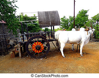 Indian Bullock Cart - A traditional bullock cart in a small...