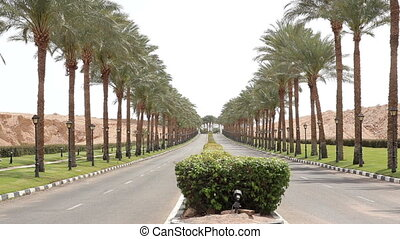 nice asphalt road lined with palm
