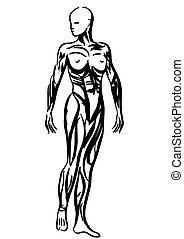 human body anatomy woman illustration - absract human body...