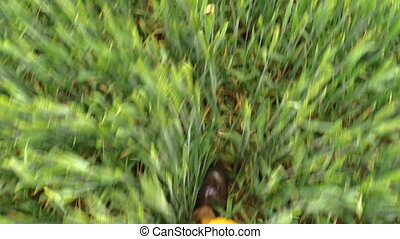 man go cereal field - male legs with brown gumboots and...