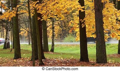 autumn  yellow road - country road  Autumn scene