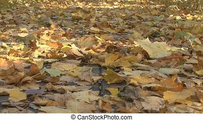 Leaves of the trees on earth - Autumnal leaves on the ground