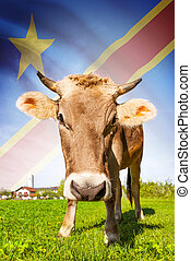 Cow with flag on background series - Democratic Republic of...