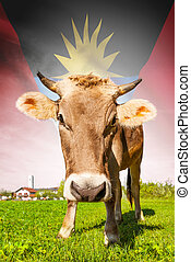 Cow with flag on background series - Antigua and Barbuda