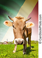 Cow with flag on background series - Republic of the Congo -...