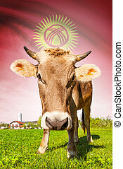Cow with flag on background series - Kyrgyzstan