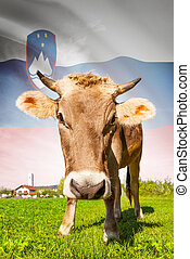 Cow with flag on background series - Slovenia