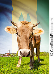 Cow with flag on background series - Saint Vincent and the...