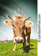 Cow with flag on background series - Macau