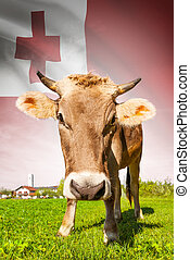 Cow with flag on background series - Tonga