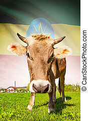 Cow with flag on background series - Ethiopia