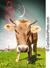 Cow with flag on background series - Turkmenistan