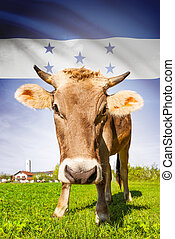 Cow with flag on background series - Honduras