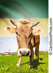 Cow with flag on background series - Gabon