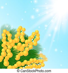 Mimosa flowers. - Vector illustration. Spring background....