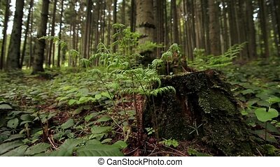 Green fern growing out of moss covered tree stump.