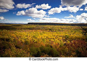 Arbres, automne, forêt,  croker, Automne, cap, paysage, falaise