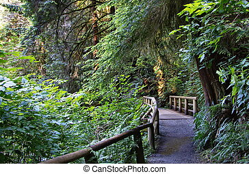 Wooden bridge on a hiking trail in the Capilano River Park