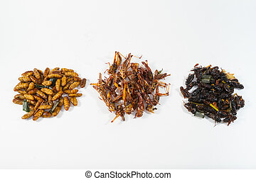 Fried insects. Protein rich food