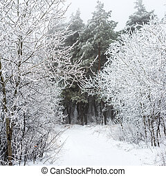 The Christmas mysterious winter snowy road in forest fog,...