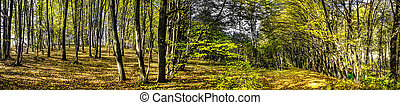 Astonishing forest by autumn - Nice panorama wood by autumn...