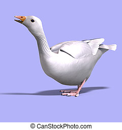 snow goose - 3D rendering of a snow goose with clipping path...