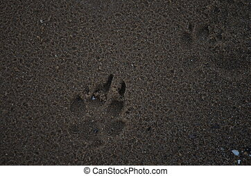 Paws-3 - dog footprints in sand