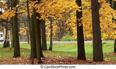 road Fast motion Autumn - country road  Autumn scene