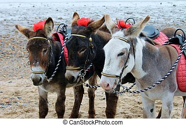 Donkey rides at seaside beach