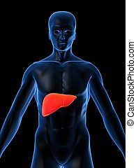 hihglighted liver - 3d rendered illustration of a...