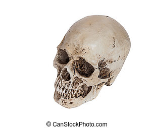 Isolated human skull on white