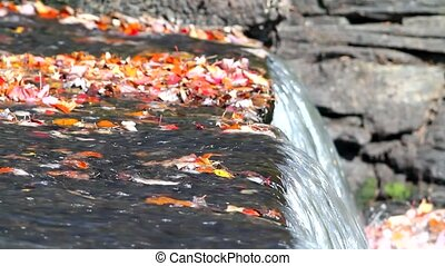Video of fall leaves and dam - A video of fall leaves atop...