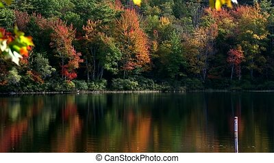 Leaves turning at Norton Pond Maine - Video of tree leaves...