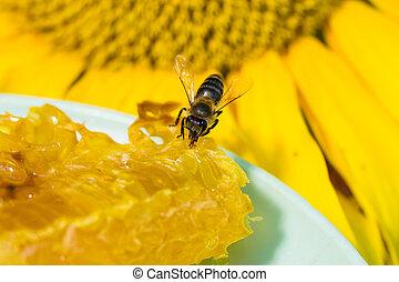 abeille, rassemblement, miel, nectar, trompe