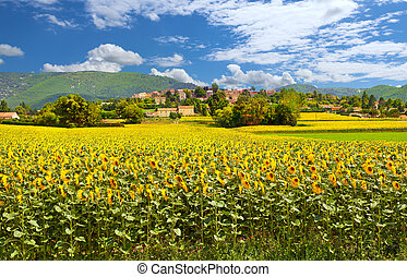 Rural landscape with sunflowers in Provence