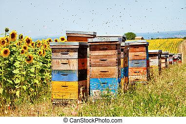 abelha, colmeias