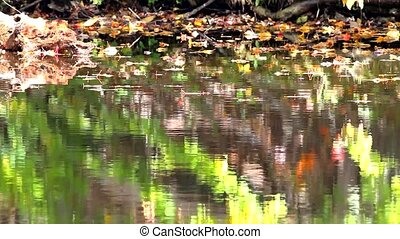 Fall leaves floating on water
