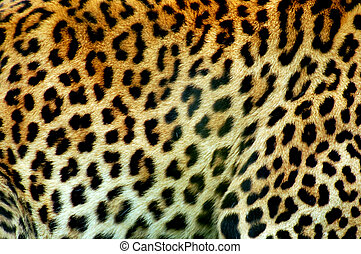 Leopard pattern - Wildlife