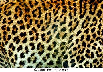 Leopardo, Padrão