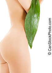 female torso with green leaf over white - picture of female...