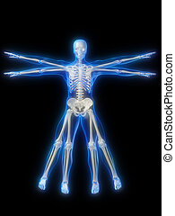 glowing skeleton - 3d rendered illustration of a glowing...