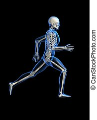 running skeleton - 3d rendered illustration of a running...