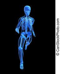 running man anatomy - 3d rendered illustration of a running...