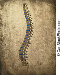 grunge spine - 3d rendered illustration of human spine -...