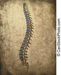 grunge spine - 3d rendered illustration of human spine -...