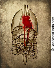 grunge organs - 3d rendered illustration of human organs -...