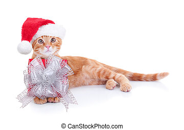 Christmas Cat Gift - Christmas Santa kitten cat with gift...